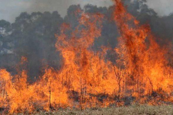 Artsakh Grassfire
